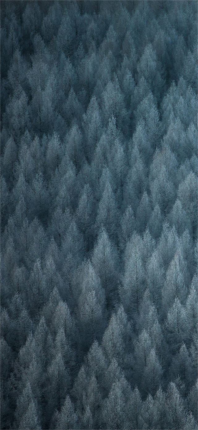 Color OS 6 Stock Wallpapers 4 e1551978510249